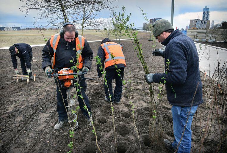 Hoveniers aan het werk in het Spoorpark. Beeld Marcel van den Bergh / de Volkskrant