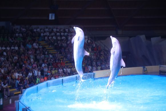 Brugge nieuwe dolfijnen show Dolfinarium
