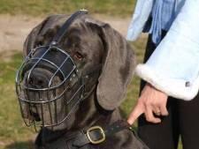 Baasje moet gevaarlijke hond ook op eigen terrein muilkorven
