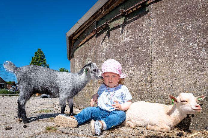 Kinderboerderij De Kerkestee in Hellevoetsluis is weer beperkt open. Nora (1) kan weer geitjes knuffelen.