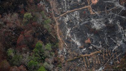 Dit staat er op het spel als Amazonewoud blijft branden: 5 vragen beantwoord
