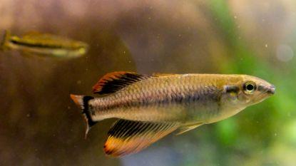 Grote beurs in Karteria voor liefhebbers van aquariums, vijvers en terrariums