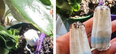 Comment un tampon hygiénique peut sauver votre plante
