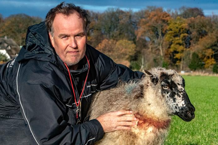 Rob Bouwens in november, met één van de schapen die toen werd aangevallen.