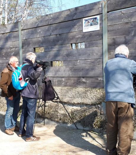 Oehoe weer terug op nest in steengroeve bij Winterswijk