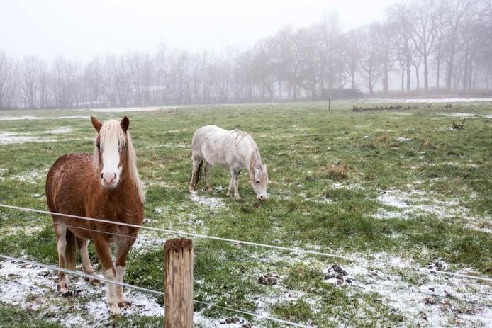 De eerste sneeuw is weer gevallen ook in het Ginneken in Breda. Foto Pix4Profs/ Gino van Outheusden