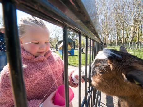Petitie over behoud Alphense kinderboerderij woensdag aangeboden