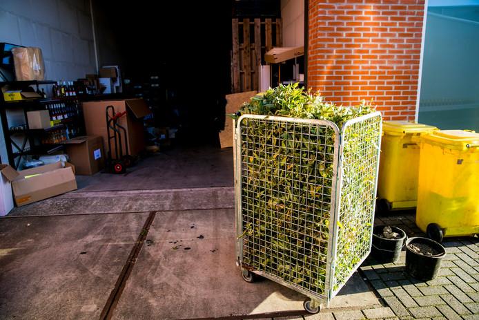 Volgens de politie gaat het om een kwekerij met 1600 planten.