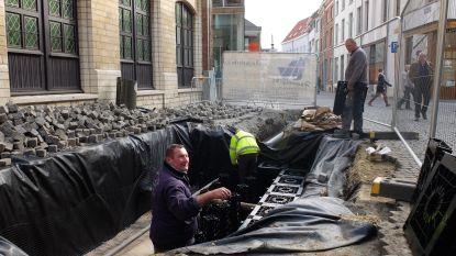 Belgische primeur voor Dijlestad: reservoir onder boom buffert regenwater