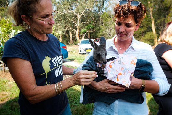 Sydney Wildlife Rescue.