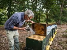 Imkers constateren teruglopende belangstelling voor bijenkasten op heide, maar de bijen zijn er weer