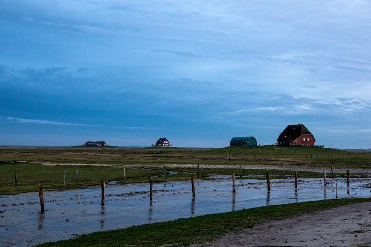 Uitzicht op twee andere boerderijen op de Halligen, vanuit de boerderij van familie Kruse.  Beeld Hilde Harshagen