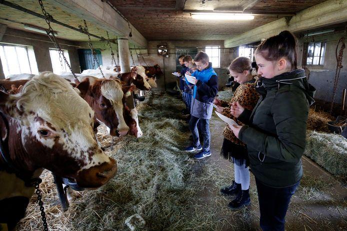 Leerlingen van groep 8 van De Rank uit Vianen tekenen koeien van melkveebedrijf Brouwer in Hei- en Boeicop.