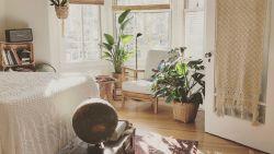 Dit zijn de beste planten voor elke kamer van je huis
