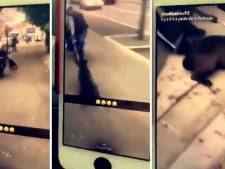 Ils se filment en train de traîner un chien en scooter
