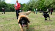 Gemeente opent derde hondenweide aan Pasbrugbos