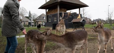 Geldermalsense dieren kregen oliebollen: 'We willen niet nog meer zieke en dode dieren in Hertenkamp'