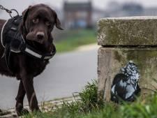 Wie is toch de Banksy van Tiel? Anonieme kunstenaar tekent de stad vol met katten
