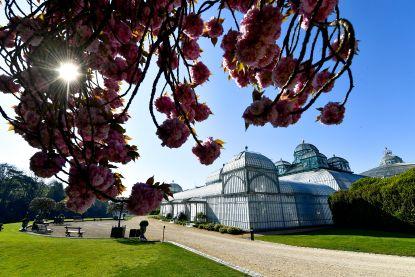Koninklijke serres van Laken gaan drie weken open voor het publiek