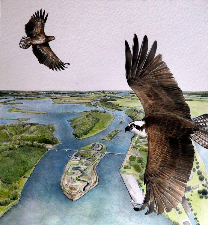 Zeearenden als icoon van de Biesbosch op de cover van het boek. De bever heeft zijn draai helemaal gevonden in de Biesbosch. Wat Thomas van der Es betreft zijn ook het edelhert en de otter meer dan welkom.