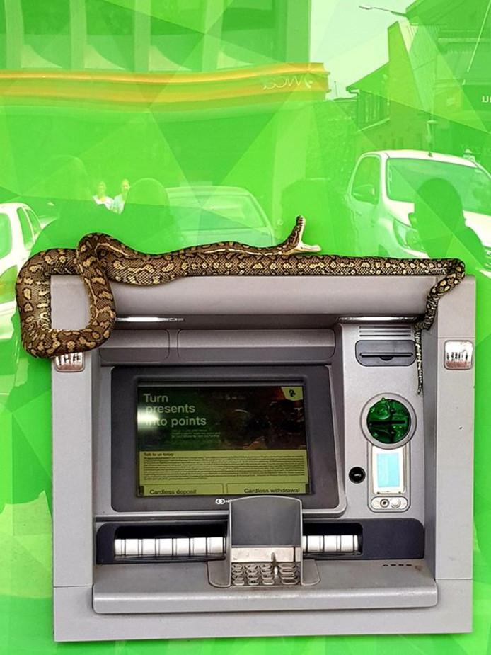 Een python hing lekker op een pinautomaat in Australië