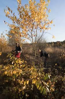 Edese SGP maakt zich zorgen over bomengroei op de hei