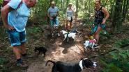 Badman en Zeroke zijn de eerste bezoekers van het hondenlosloopbos in Gerhagen