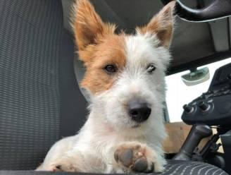 Jogger die hondje Dribbel doodstak in Waasmunster is opgepakt na verspreiding van camerabeelden