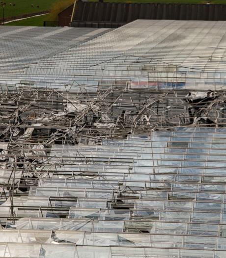 Start gemaakt met wederopbouw gerberakwekerij na windhoos Mijdrecht