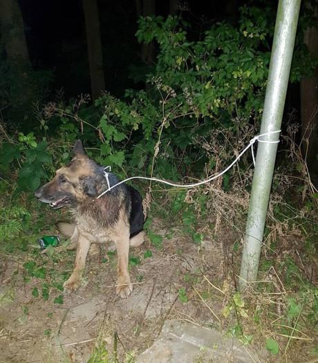 Gedumpte dove hond met staar overleden
