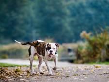 Voorgenomen hondenverbod in Kralingse Bos valt verkeerd: 'Geef viervoeter de ruimte'