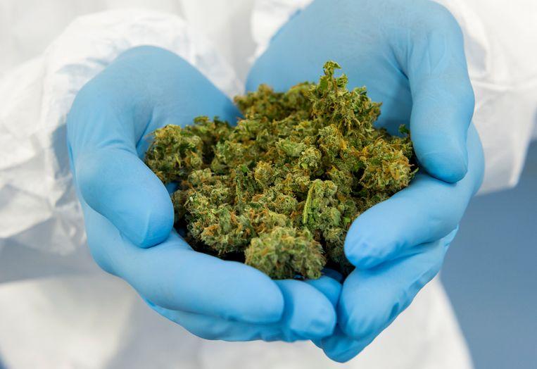 Medicinale cannabis.