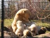 Pasgeboren ijsbeer voor het eerst naar buiten in Berlijn