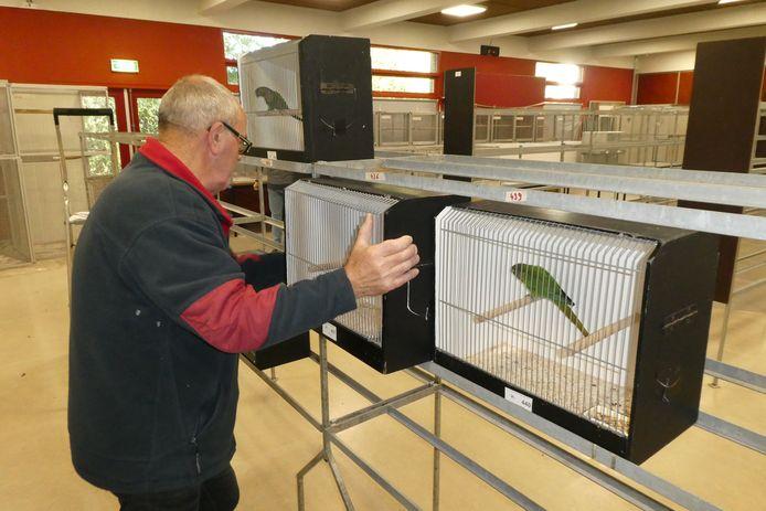 De eerste vogelkooien worden in de 'klikklak'-stellingen gezet in de Moerkoal.