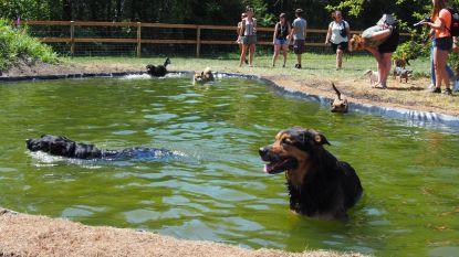 Deze zwemvijver is 'van den hond'