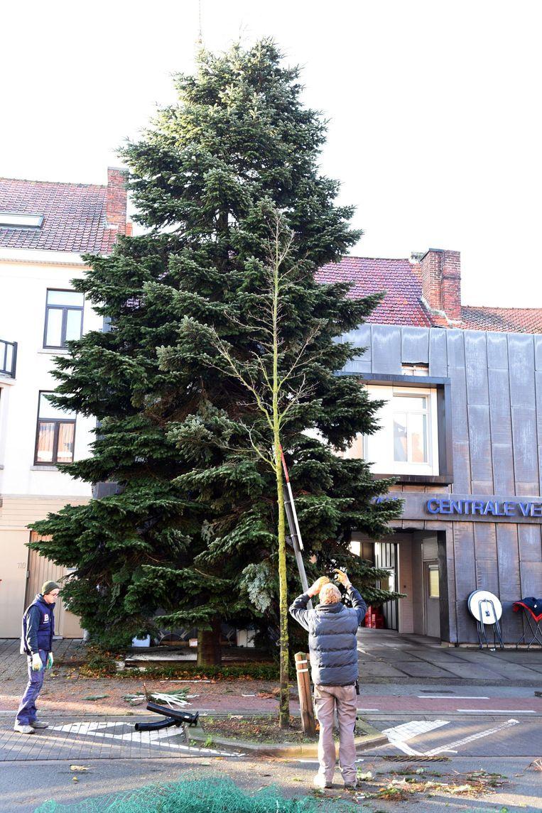 De kerstboom aan Deneckere in de Oudenaardsesteenweg in Kortrijk komt uit Heule en wordt versierd met 25.000 lichtjes.