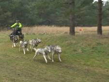 Racen met Husky's op het Engelse platteland