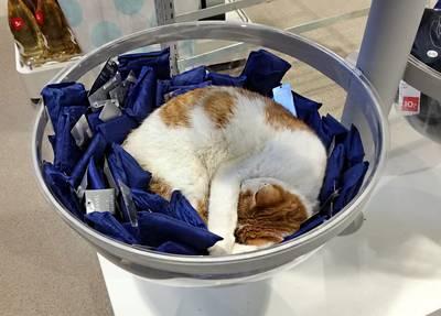 Kat Charlie wandelt elke dag door winkelcentrum Maassluis. Zijn lievelingsplekje? Een koopjesmand