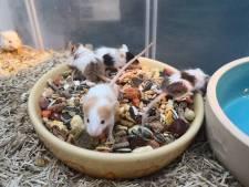 Muizen gedumpt, dierenambulance boos