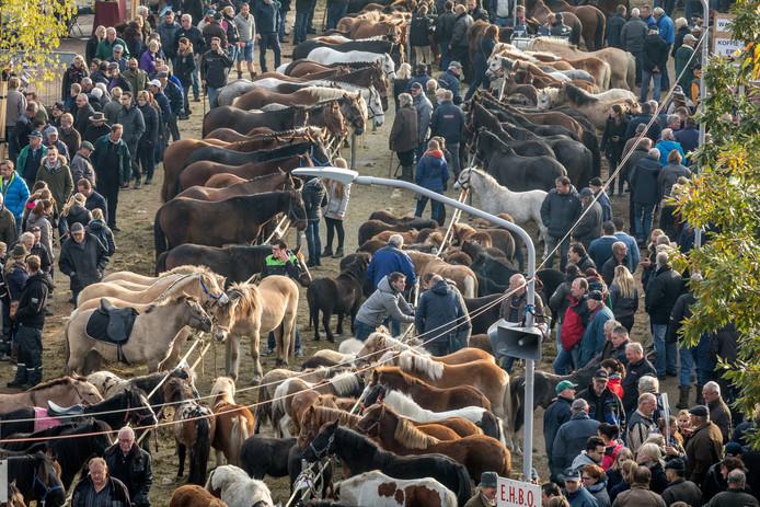 De paardenmarkt in Hedel, vorig jaar november.