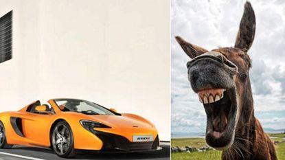 Ezel knabbelt aan wortelkleurige sportwagen: duizenden euro schade