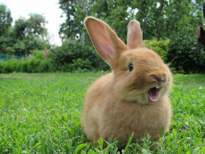 Foto ter illustratie. Een  konijntje is ingesmeerd met sop. Maar na een wasbeurt gaat het weer goed met  het knaagdier.