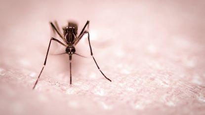 Dit is waarom een mug precies jou als doelwit uitkiest
