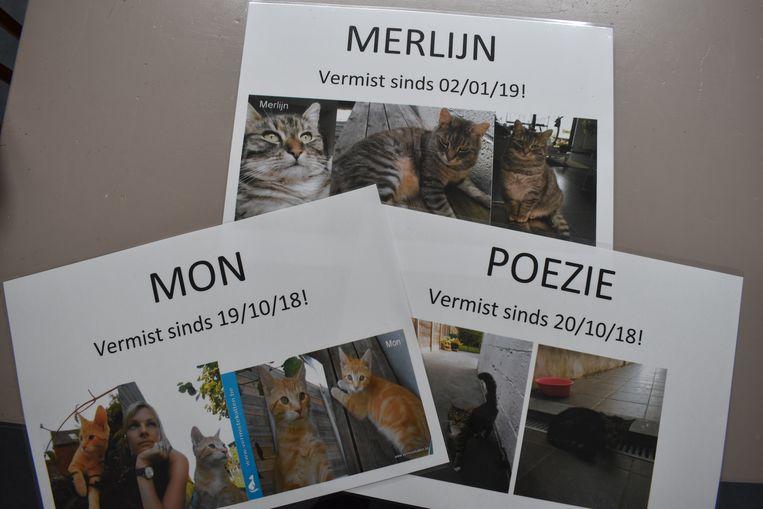 Jolien en Leen hebben alles geprobeerd om hun katten terug te vinden.