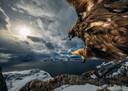 'Land of the eagle', Noorwegen. Winnaar in de categorie Behaviour: Birds. Audun Rikardsen positioneerde deze boomtak zorgvuldig, in de hoop dat hij een perfecte uitkijk zou zijn voor een steenarend. Hij zette een cameravalletje op. Heel geleidelijk begon deze adelaar de tak te gebruiken om zijn kustgebied te onderzoeken.