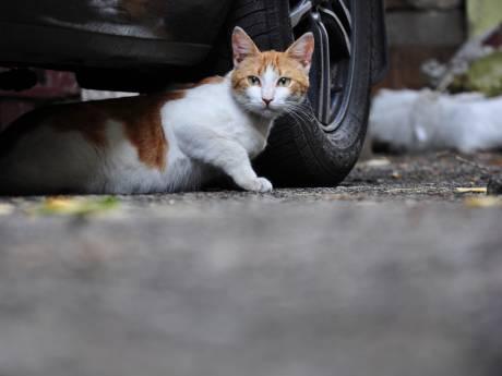 Boze reacties op  zwerfkattenjacht in Leerdam en Zederik