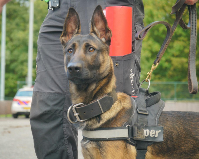 politiehond bumper krijgt eigen boek leuk leerzaam en