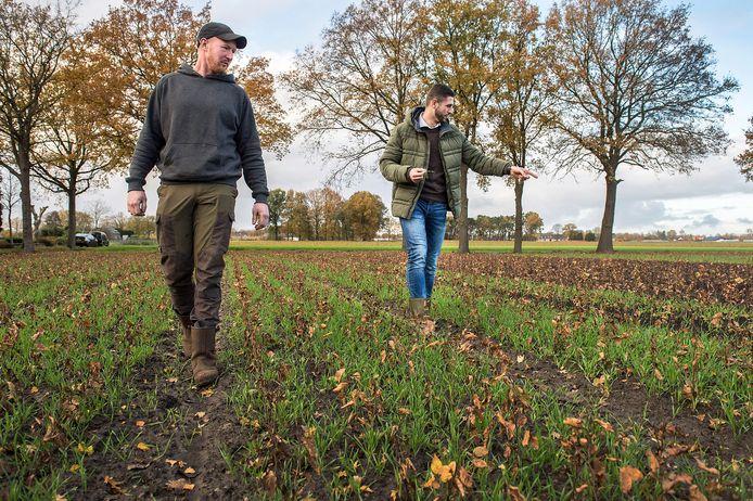 Edwin Raats (l) en Tijmen Dekkers lopen over proefperceel voor duurzame irrigatie voor boomkwekerijen.
