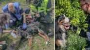 Pompiers redden leven van hond die achterbleef in brandend huis