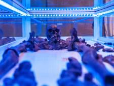 Goudse kinderskeletjes te zien in museum: 'Ik ben wel blij dat ik nu leef'